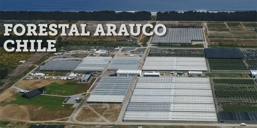 890x444 ARAUCO-VIDEO.png
